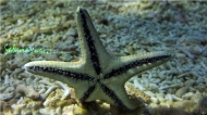 Something FiShy: stars, sharks & rays